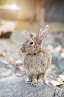 アニマルファームガーデンタイでケージの乾いた草の上に座っているウサギ