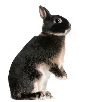고립 된 흰색 뒷 다리에 토끼 서