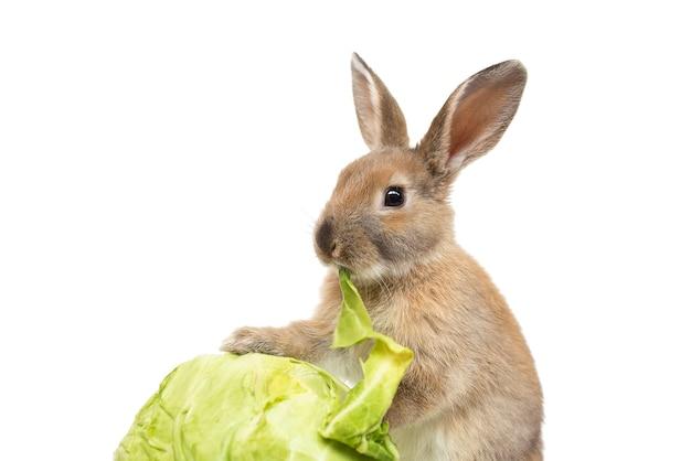 Кролик с капустой на белом фоне