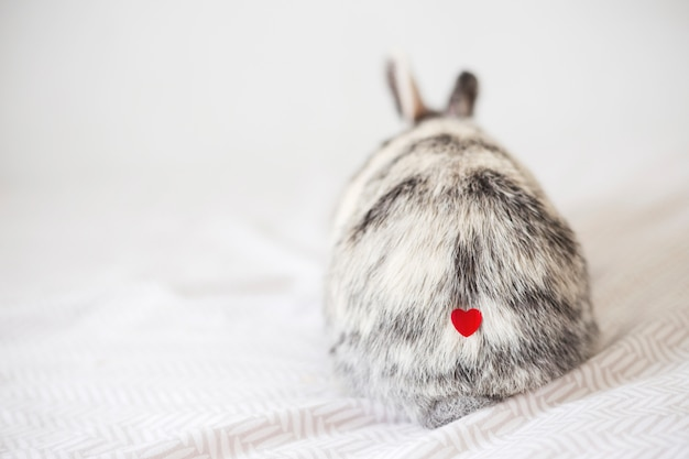 Rabbit with ornament heart on fur