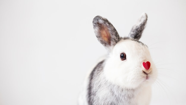 Rabbit with ornament heart on nose