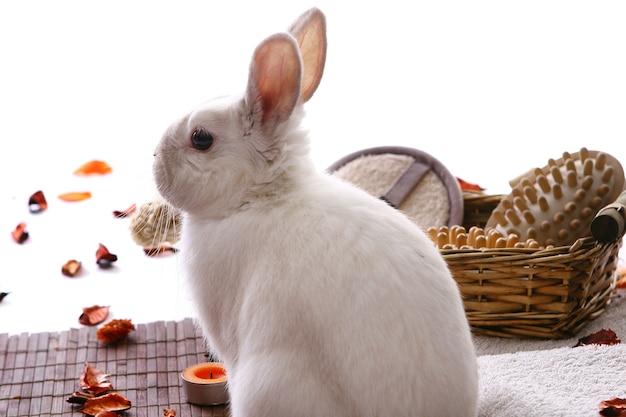 白のスパ製品とウサギ