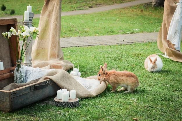 緑の芝生に結婚式の装飾が施されたウサギ
