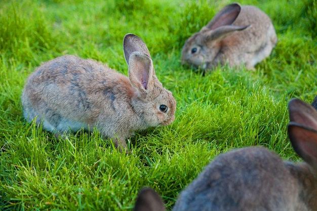 Rabbits eat the grass in the garden
