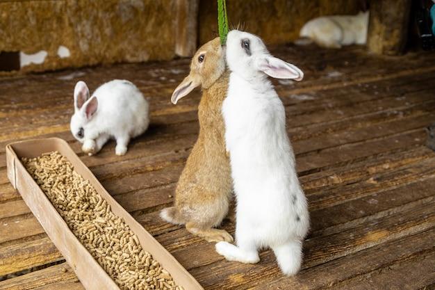 緑の葉を食べるために起き上がるウサギ。