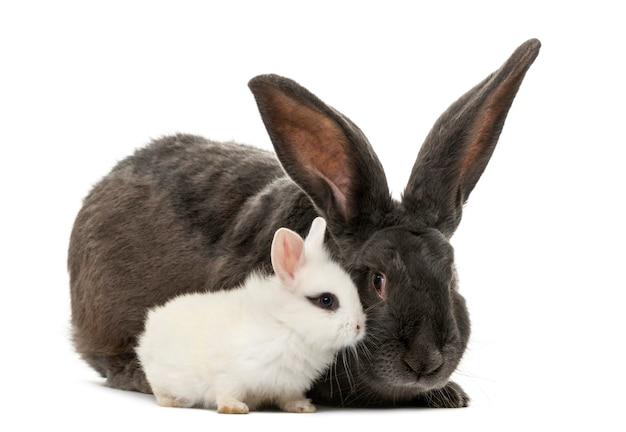 白い表面の前のウサギ