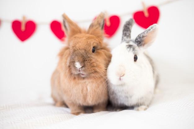 Rabbits near ornament hearts on thread