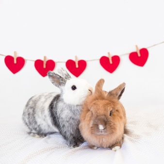 Rabbits near row of ornament hearts on twist