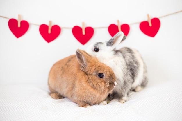 Conigli vicino a fila di cuori ornamento sul filo