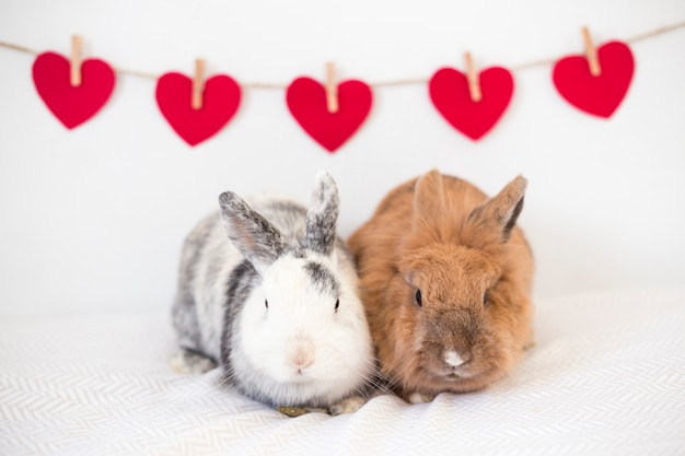 Rabbits near row of ornament vinous hearts on thread