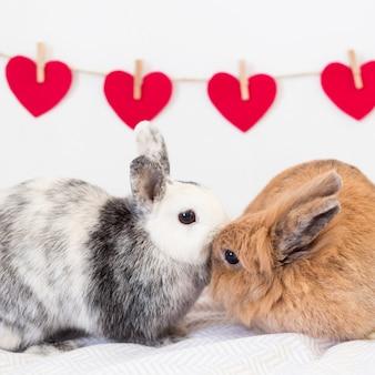 Rabbits near set of ornament hearts on twist