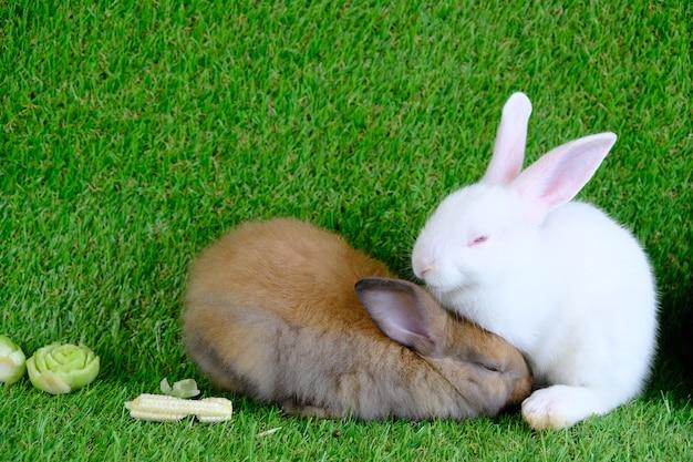 Кролики на зеленой траве, едят фрукты и овощи