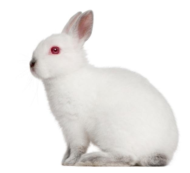 고립 된 백색에 토끼