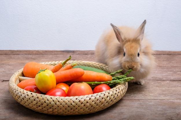 나무 바닥에 토끼, 당근, 오이, 토마토 및 나무 바닥에 배럴