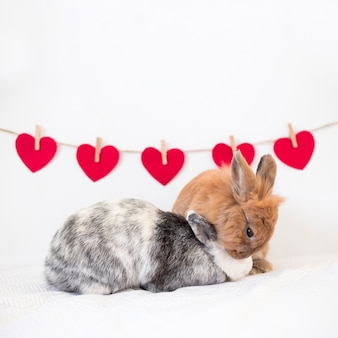 Rabbits playing near set of ornament hearts on twist