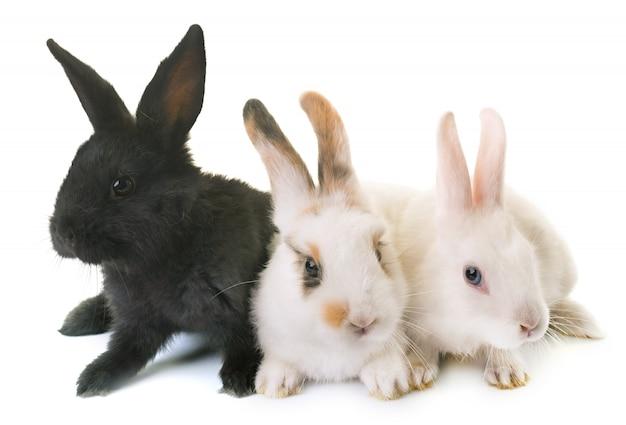 Rabbits in studio