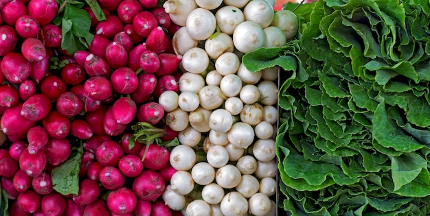 Radish, celery and cabbage bunches