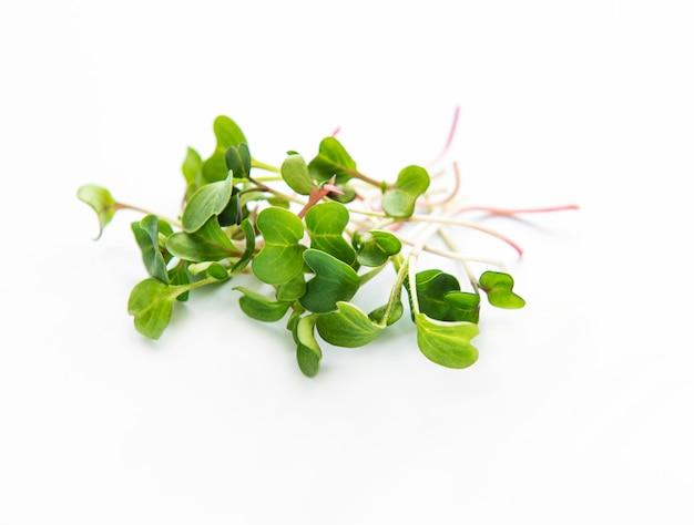 Редька микро зелень