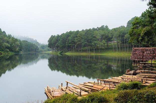 Бамбуковое озеро и сосновый лес на плоту утром в национальном парке панг унг в провинции мэхонгсон, таиланд