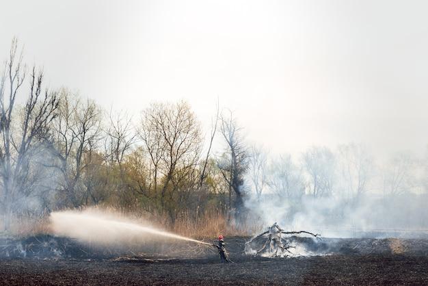 荒れ狂う森の春火。乾いた草を燃やし、湖に沿って葦。草が牧草地で燃えています。生態学的大災害。火と煙はすべての生命を破壊します。消防士は大火事を消します。たくさんの煙