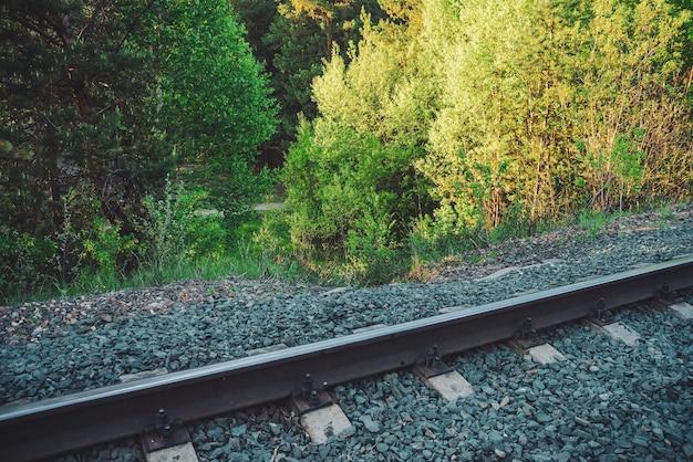 나무를 따라 철도. 녹색 식물 배경 복사 공간에 철도
