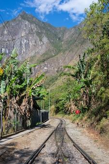 The railroad track crossing jungle