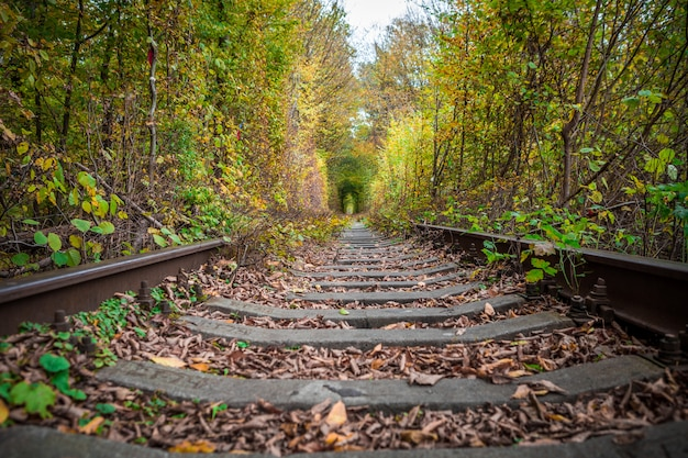 A railway in the autumn forest tunnel of love