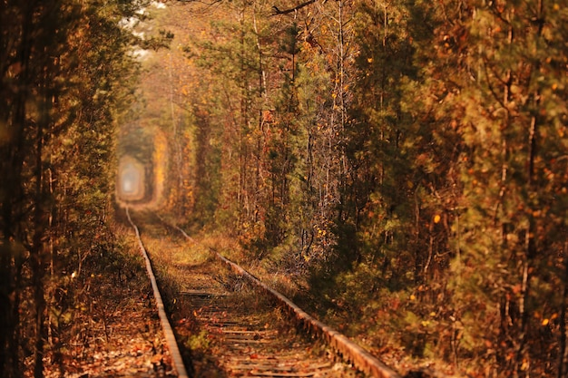 A railway in autumn forest