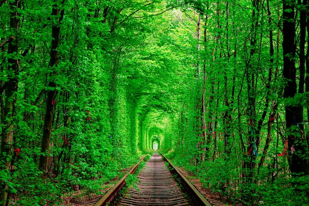 A railway in the forest