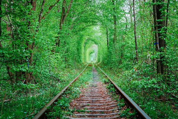 A railway in the spring forest. tunnel of love, green trees and the railroad