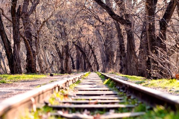 숲에서 철도 트랙