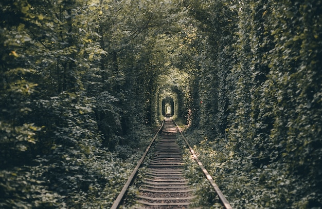 Railway tunnel of trees and bushes, tunnel of love