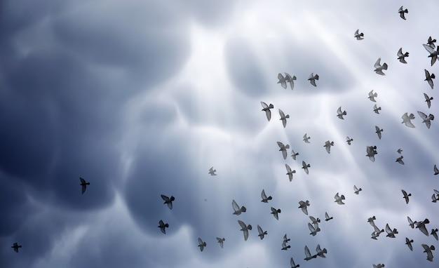 Дождевые облака в небе и стая голубей. серые темные облака на небе и солнечные лучи освещают землю. религиозное понятие веры, лучи солнца освещают путь.