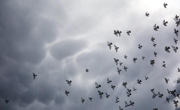 하늘에 비구름과 비둘기 떼. 하늘의 회색 검은 구름과 태양 광선이 지구를 비춥니다. 신앙의 종교적 개념인 태양 광선이 길을 비춥니다.