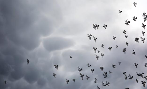 空に雨雲と鳩の群れ。空の灰色の暗い雲と太陽の光が地球を照らしています。信仰の宗教的概念である太陽の光線が道を照らします。