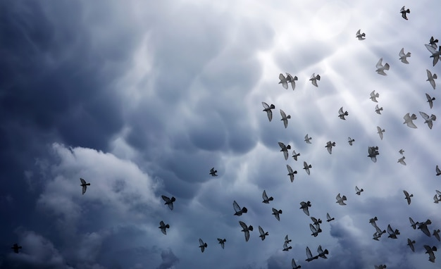 Rain clouds in the sky and a flock of pigeons. the gray dark clouds in the sky and the sun's rays illuminate the earth. the religious concept of faith, the rays of the sun illuminate the path.
