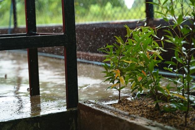 Rain drop on cristina tree plant