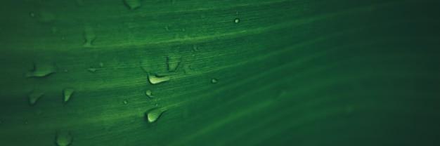 바나나 잎 텍스처 배너 배경에 비가 드롭.