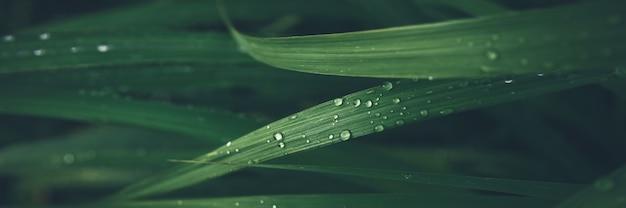 녹색 잔디 잎 텍스처 배너 배경에 비 드롭.