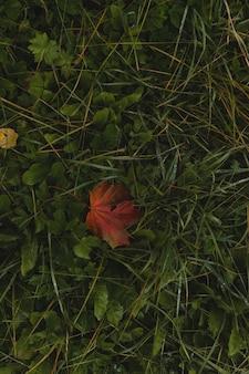 背景の緑の草の自然なテクスチャに雨が降る