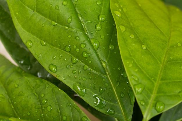 緑の葉に雨の滴をクローズアップ