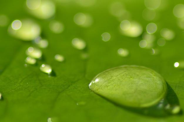 Дождь падает на лист лотоса крупным планом
