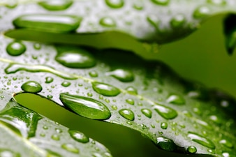 Rain drops over freen leaf
