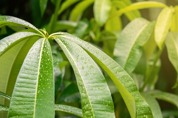 Rain drops track the green leaves