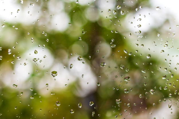 Rain drops on window and green nature background.