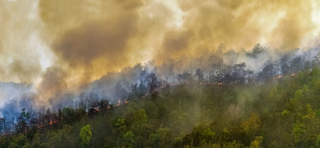 Rain forest fire disaster caused by humans