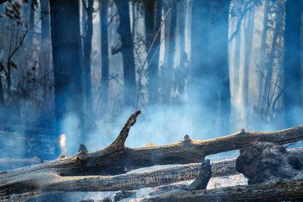 Пожар в тропическом лесу горит Premium Фотографии