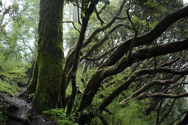 ネパールの熱帯雨林