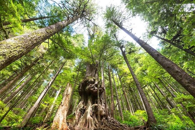 캐나다 브리티시컬럼비아주 밴쿠버 섬의 열대 우림