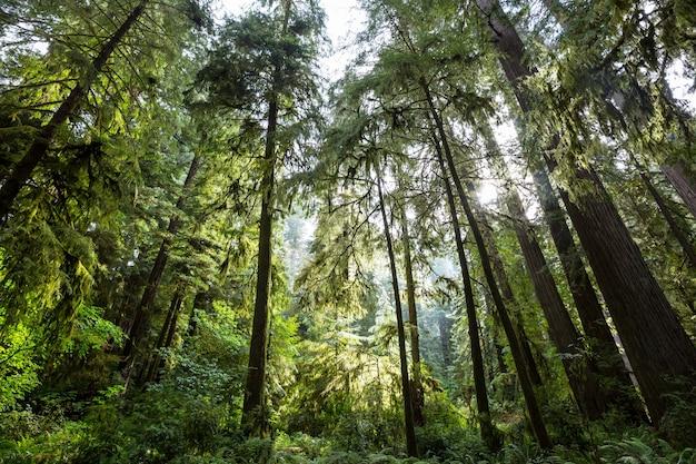 植生が密集した熱帯雨林